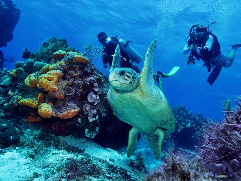 Playa Tortugas Cancún - Todo lo que debes saber 3