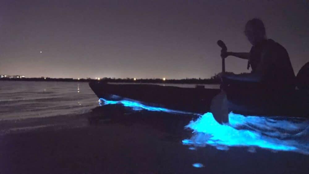 Bioluminiscencia en Holbox - Bioluminiscencia en kayak