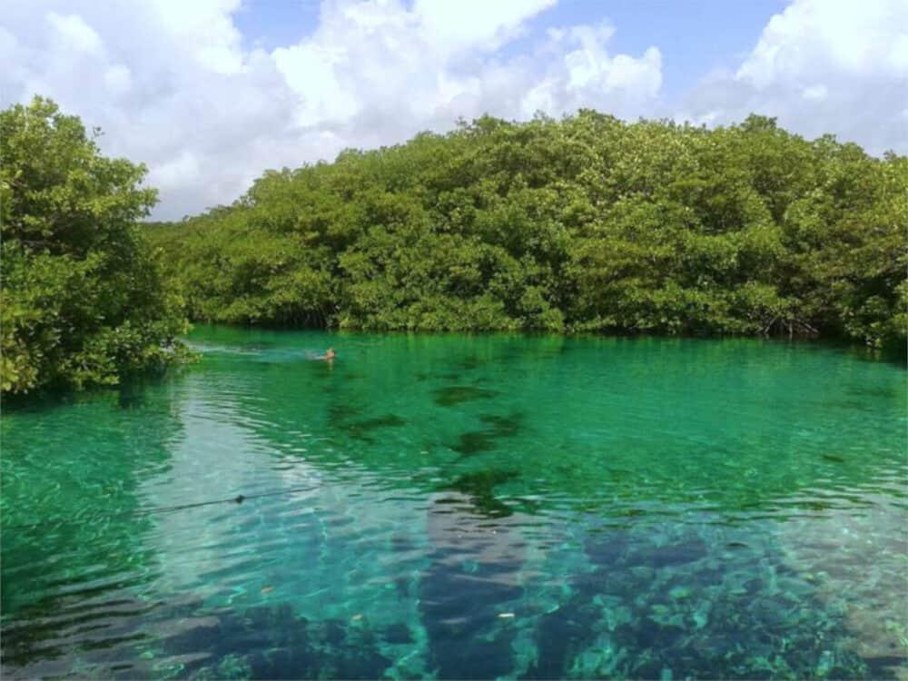 Cenotes Playa del Carmen - Cenote Manatí