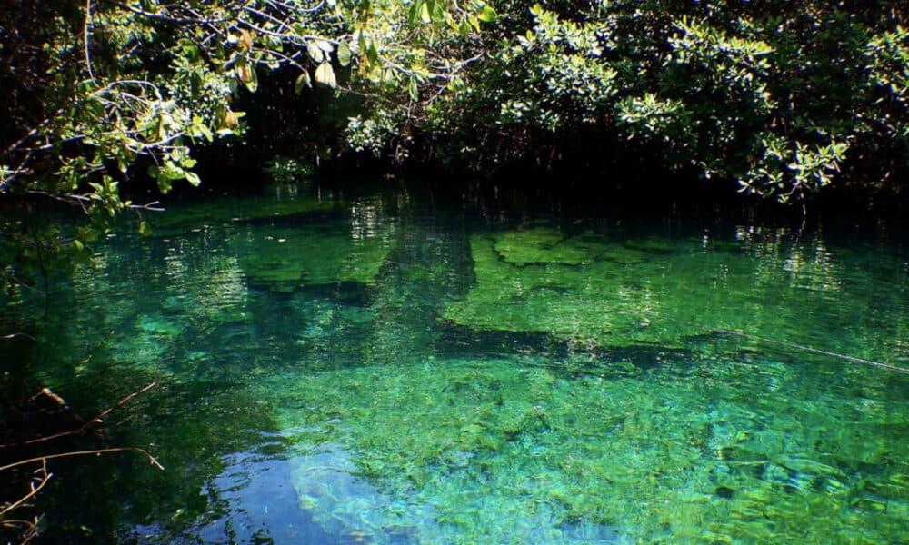 Cenotes Playa del Carmen - Cenote Xcacelito