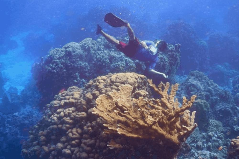 Cruceros Cozumel - El Arrecife Columbia