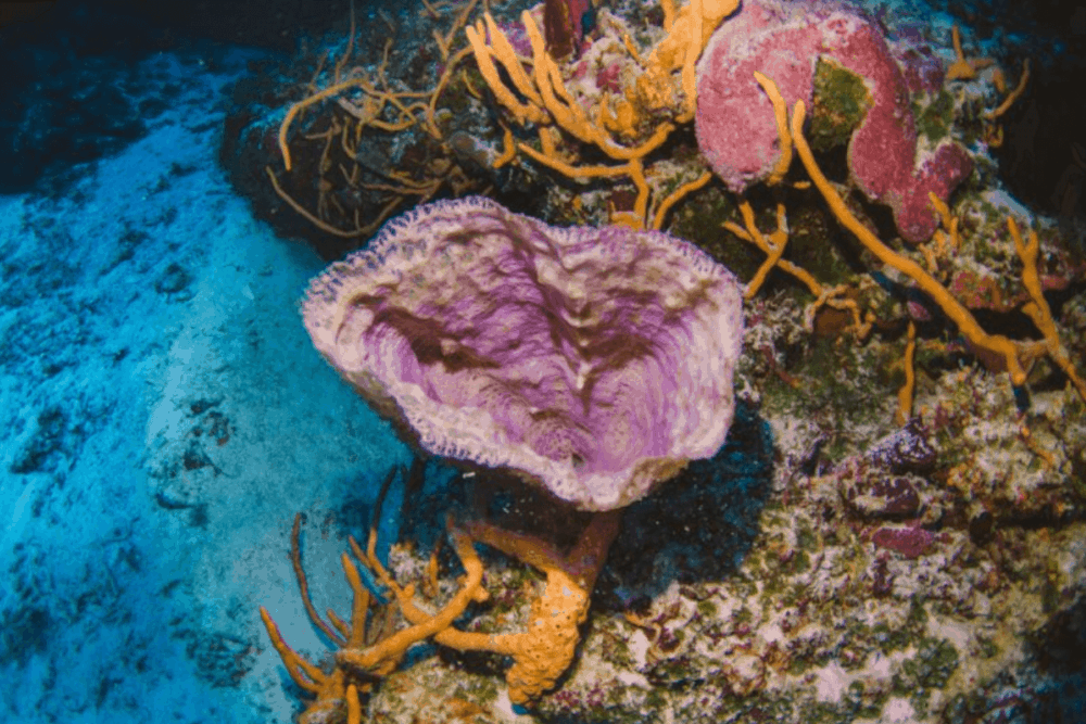 Cruceros Cozumel - El Arrecife Palancar