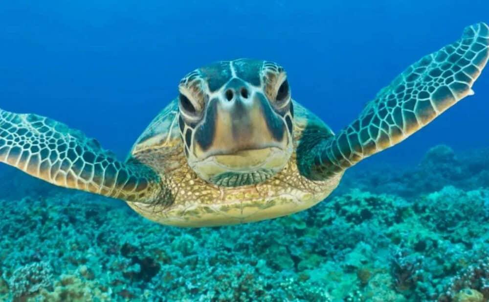 Playa Akumal - Nado con Tortugas