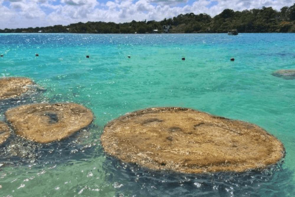 Qué hacer en Bacalar - Conoce los Estromatolitos