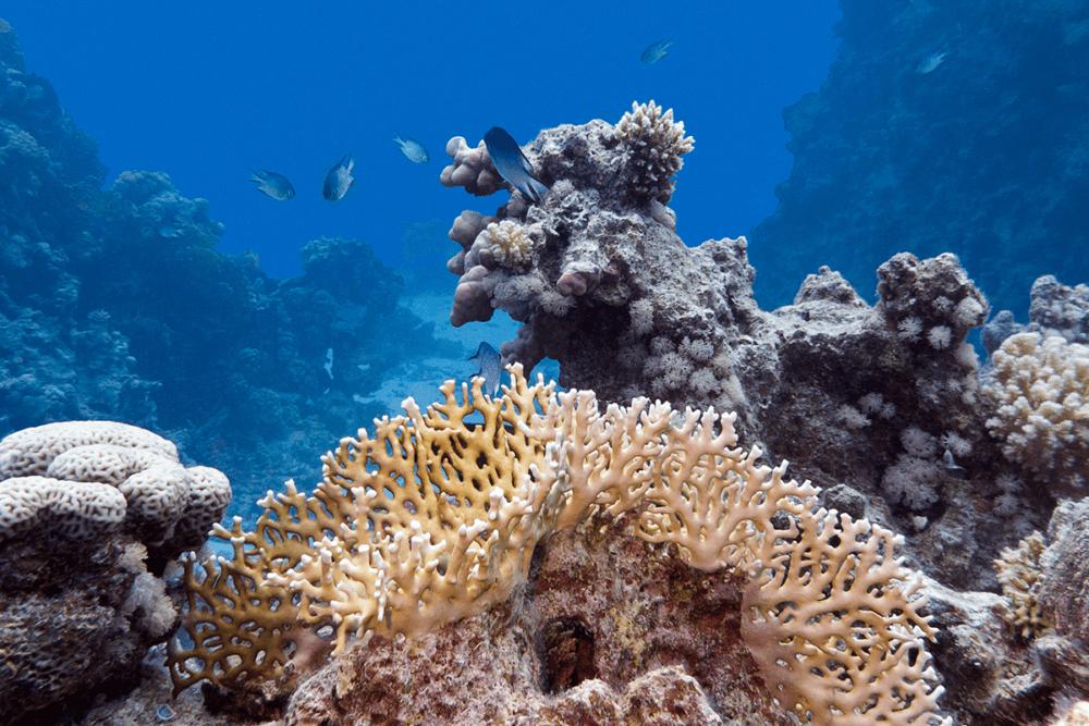 Qué hacer en Tulum - El Gran Arrecife Maya