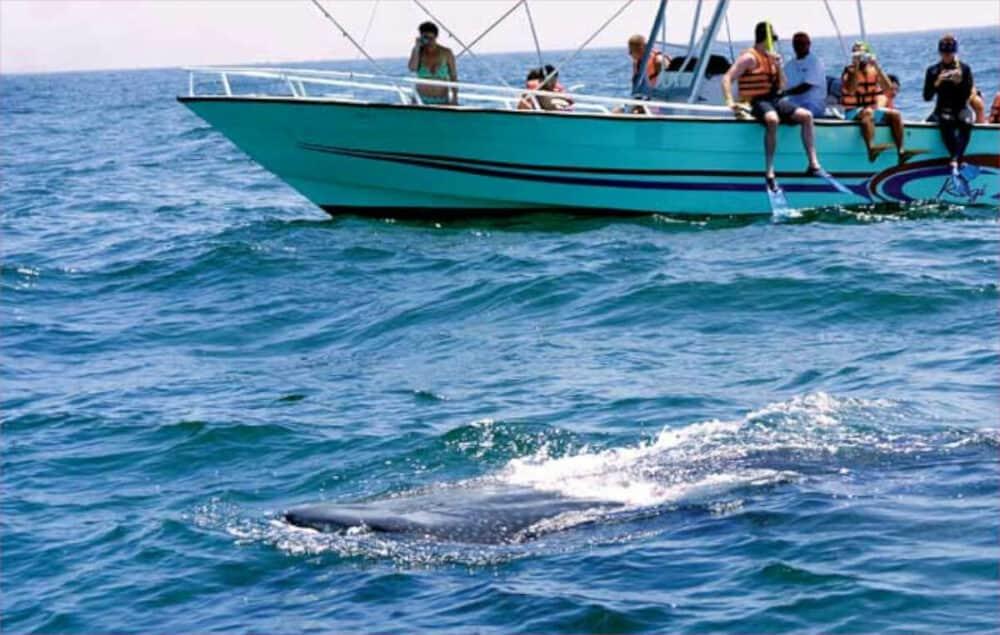 Tiburón ballena Holbox - Lancha