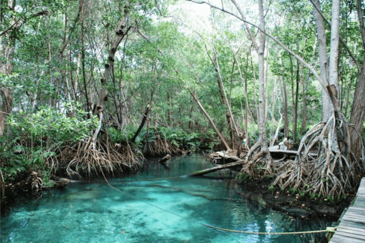 Celestun Yucatán - El Manantial Baldiosera