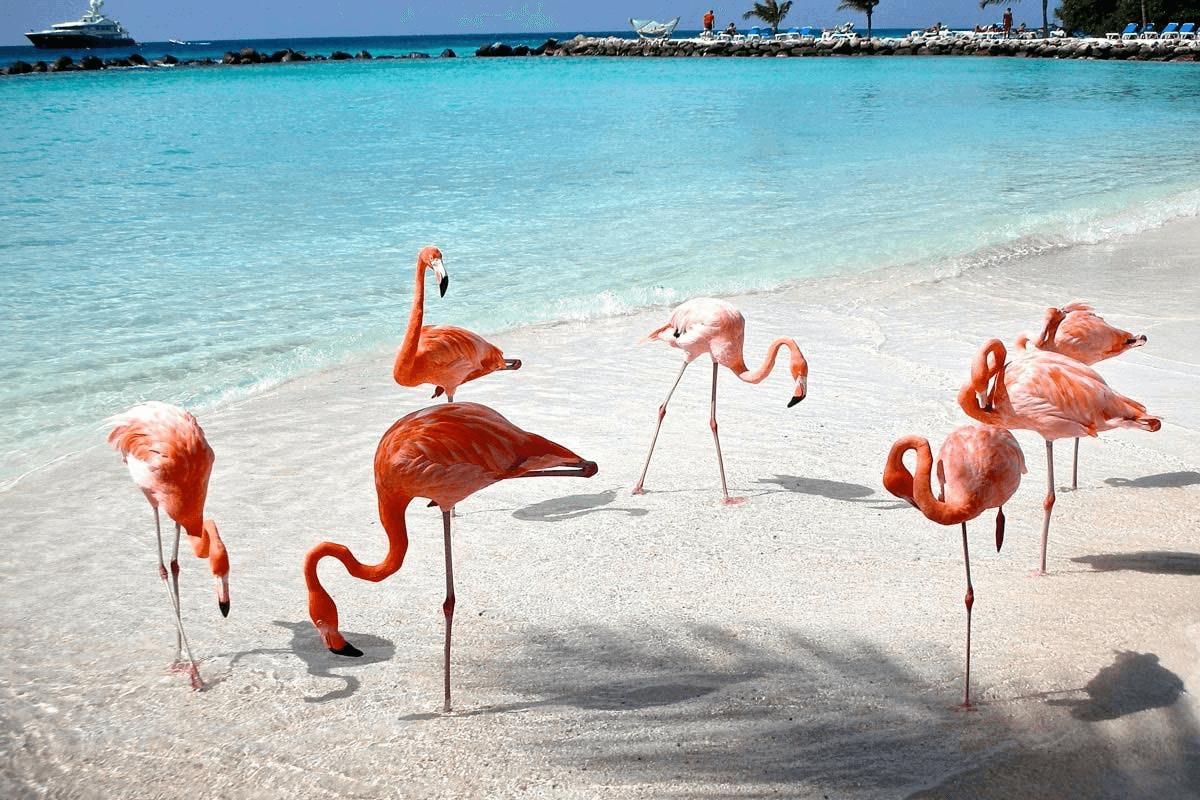 Celestun Yucatán - Variado Ecosistema
