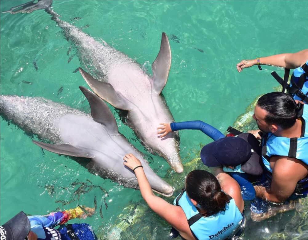Dolphin Discovery - Delfín caricias