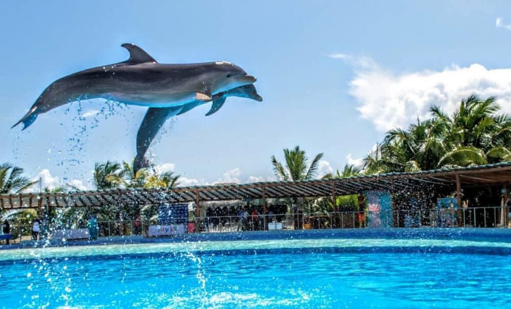 Dolphin Discovery - Delfines en el aire