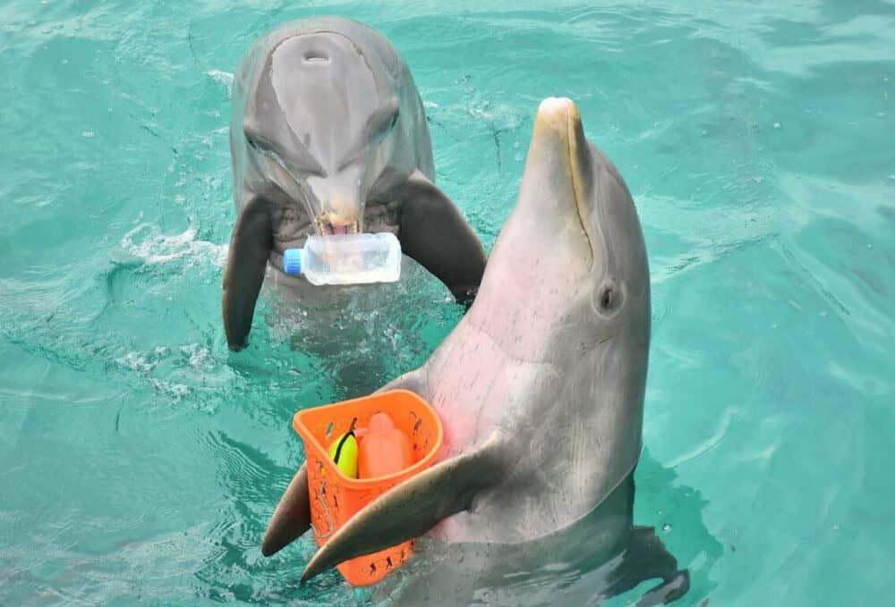 Dolphin Discovery - Delfines jugando