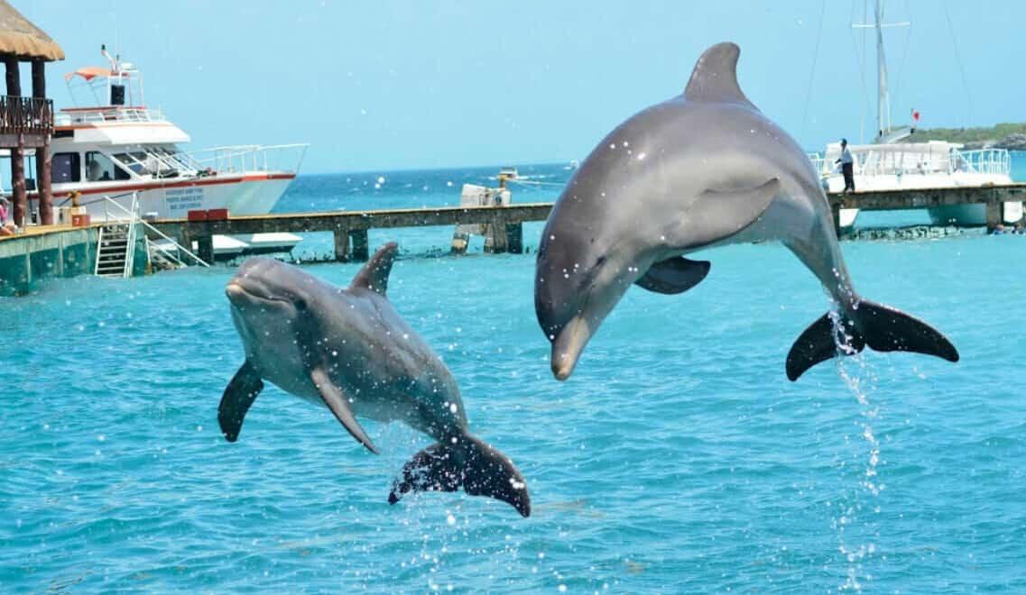 Dolphin Discovery - Delfines saltando