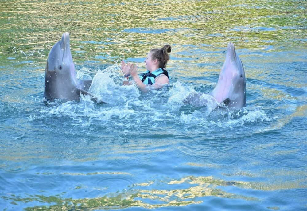 Dolphin Discovery - Nado con delfines