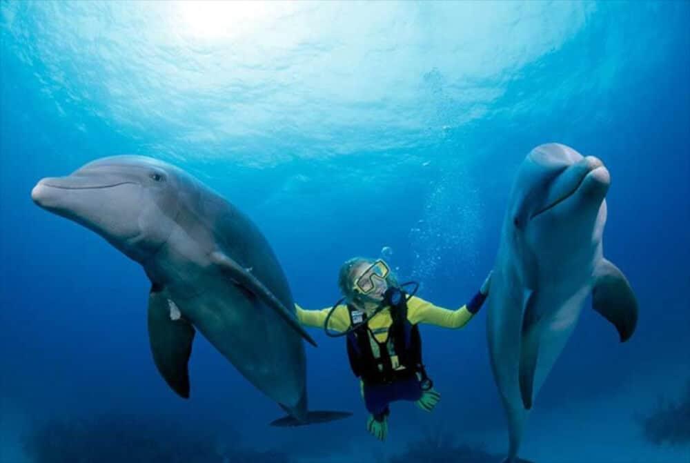 Dolphin Discovery - Buceo con delfines