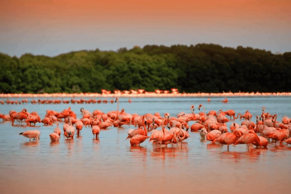 Playas de Yucatán - Playa Celestún