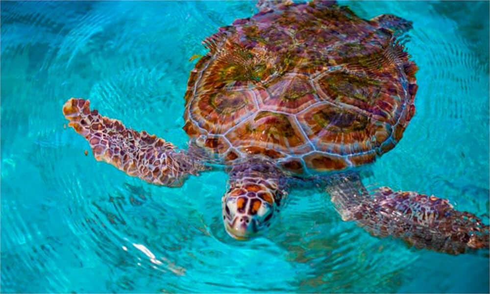 Qué hacer en Isla Mujeres - Tortugranja