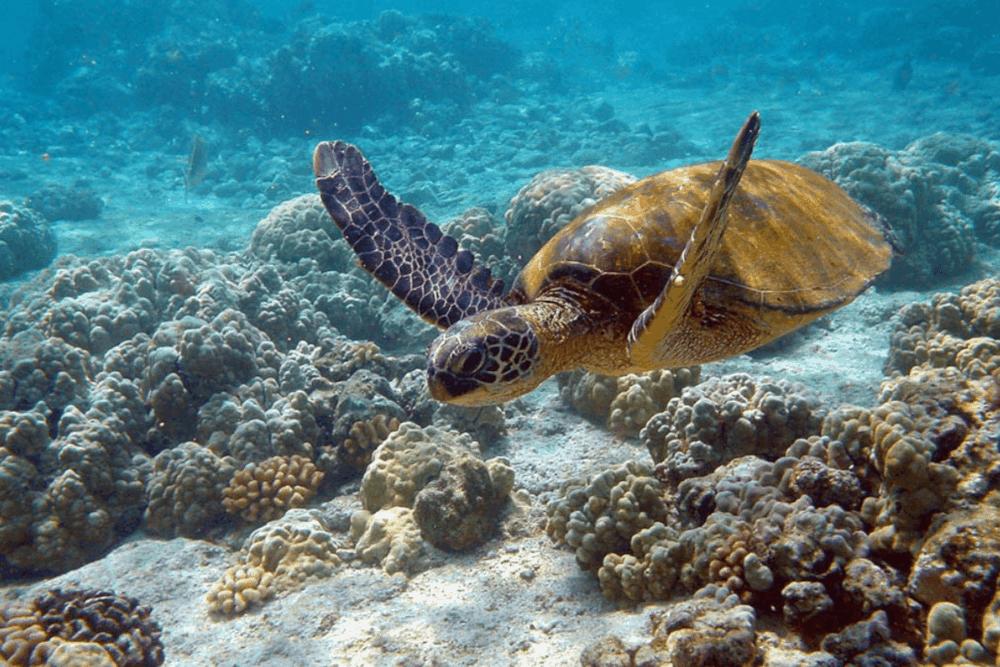 Sian Ka'an Quintana Roo - El Arrecife de Coral