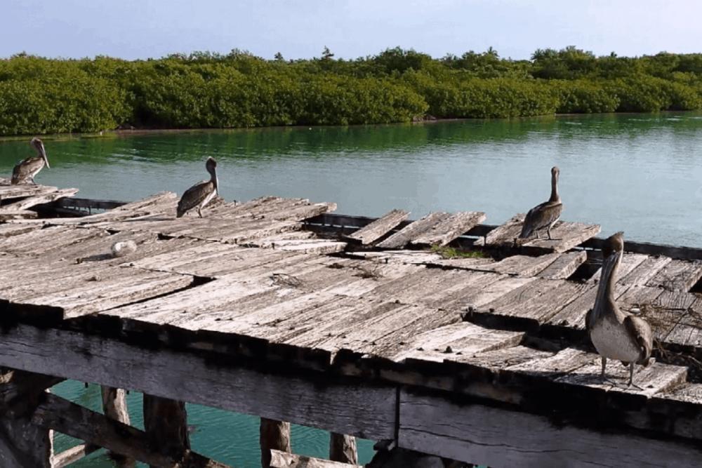 Sian Ka'an Quintana Roo - El Puente de Boca Paila