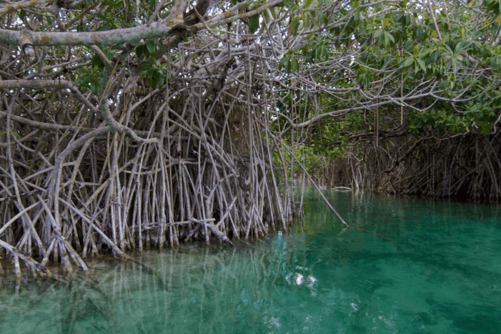 Sian Ka'an Quintana Roo - Recorrer los Manglares