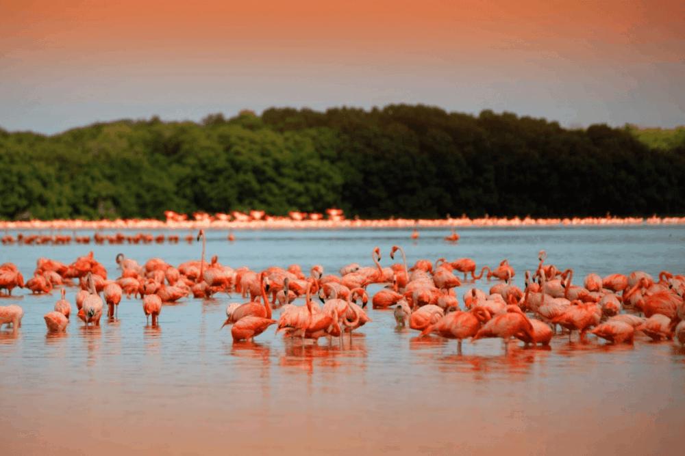 Valladolid Yucatán Pueblo Mágico - Reserva de Biosfera de Ría Lagartos