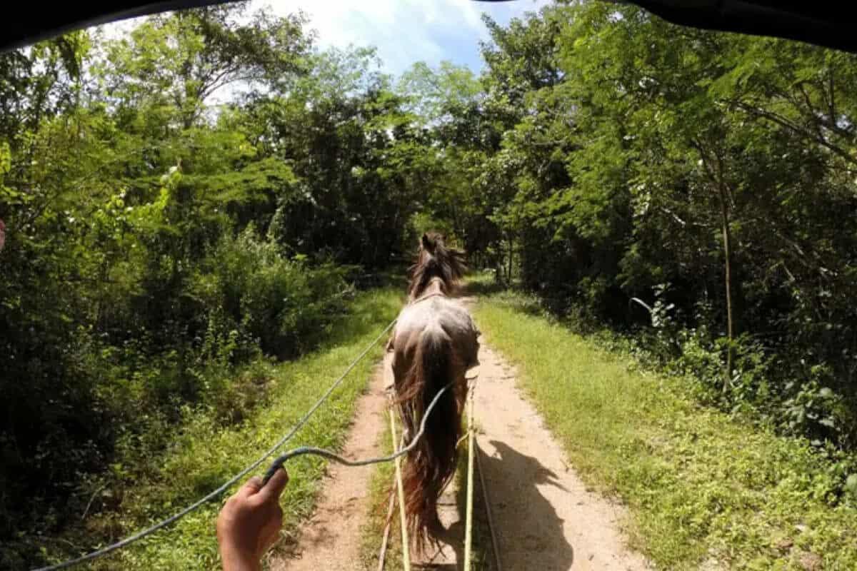 Cenotes de Cuzamá - Recomendaciones para visitar los Cenotes de Cuzamá