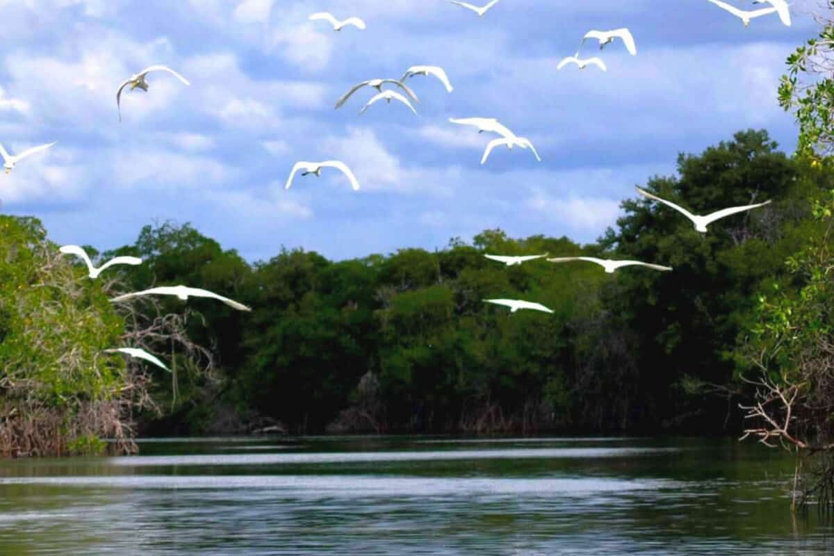 Champotón Campeche - El Río Champotón