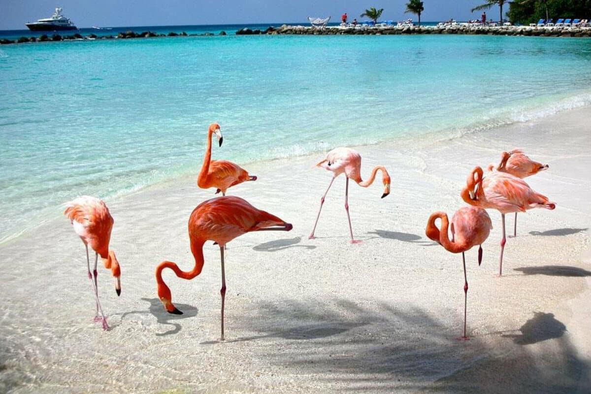 Las mejores Playas de Yucatán - La Playa Celestún