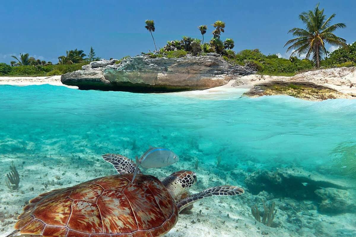 Mejores Playas de Quintana Roo - Xcacel Xcacelito