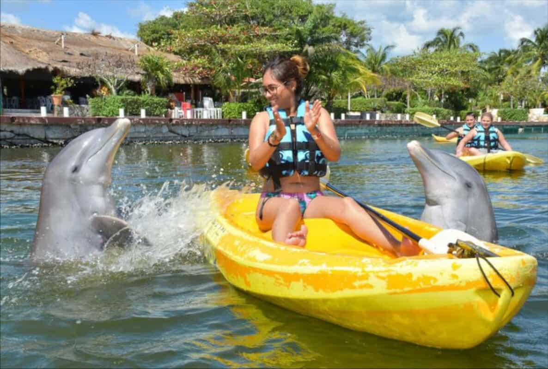 Puerto Aventuras - Dolphin Discovery