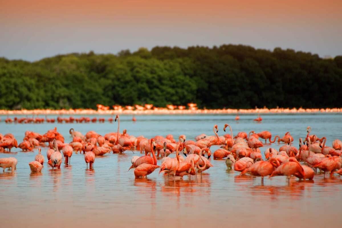 Río Lagartos Yucatán - Reserva de la Biosfera de Río Lagartos