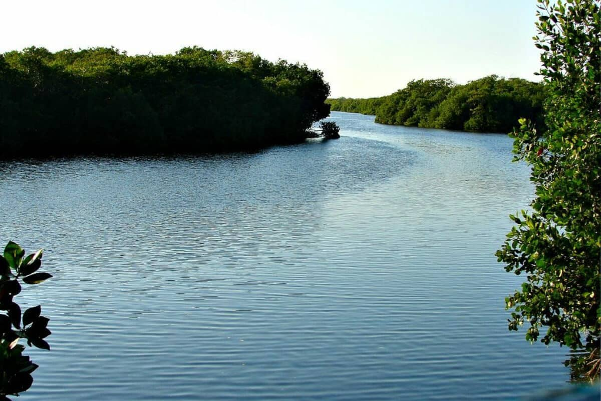 San Francisco de Campeche - La Reserva de la Biósfera de los Petenes