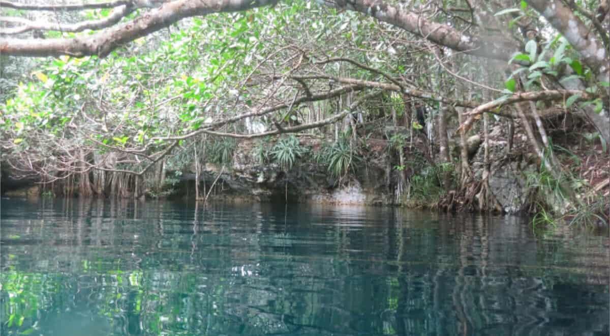 Cenote Angelita - vegetación