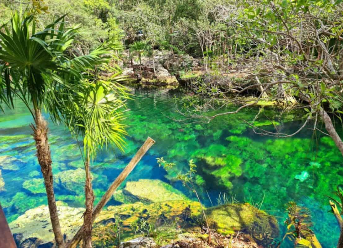 Cenote Jardín del Edén - Vegetación abundante