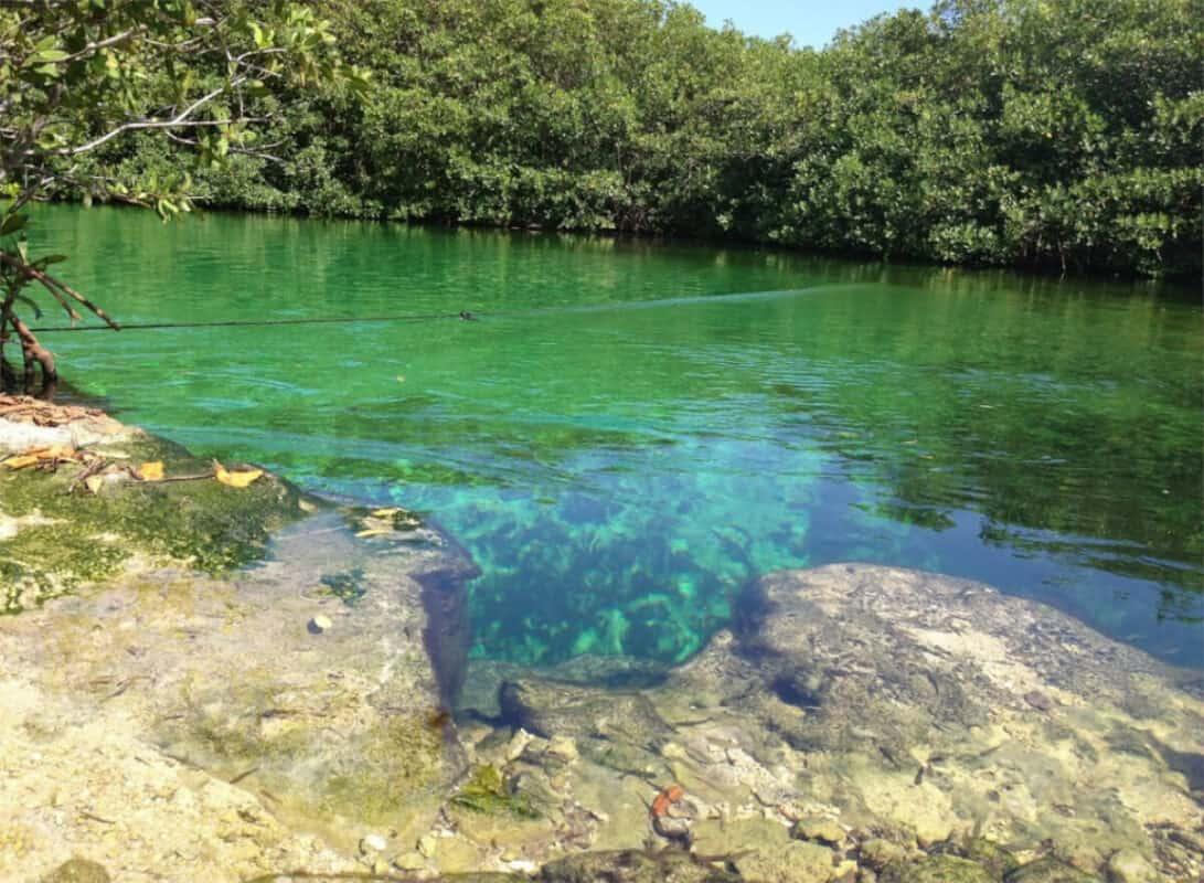 Cenote Manatí - Aguas verdosas