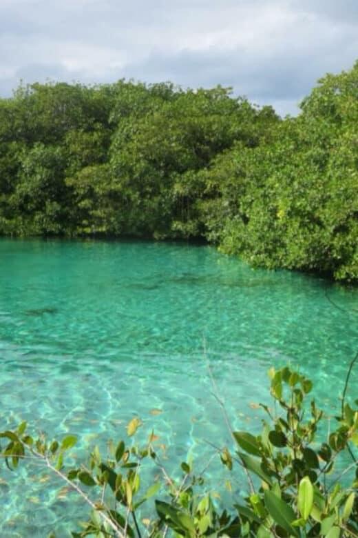 Cenote Manatí - Casa Cenote