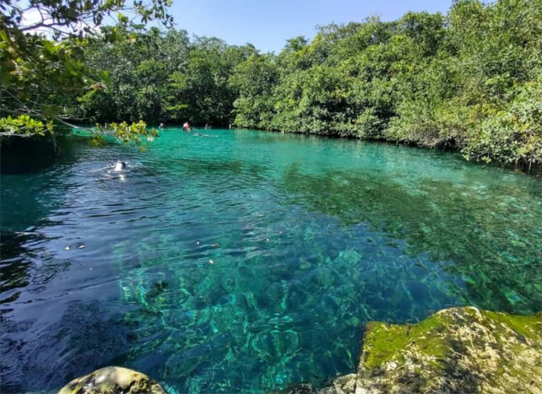Cenote Manatí - Cenote y vegetación
