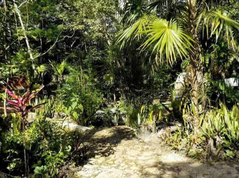 Cenote Siete Bocas - naturaleza