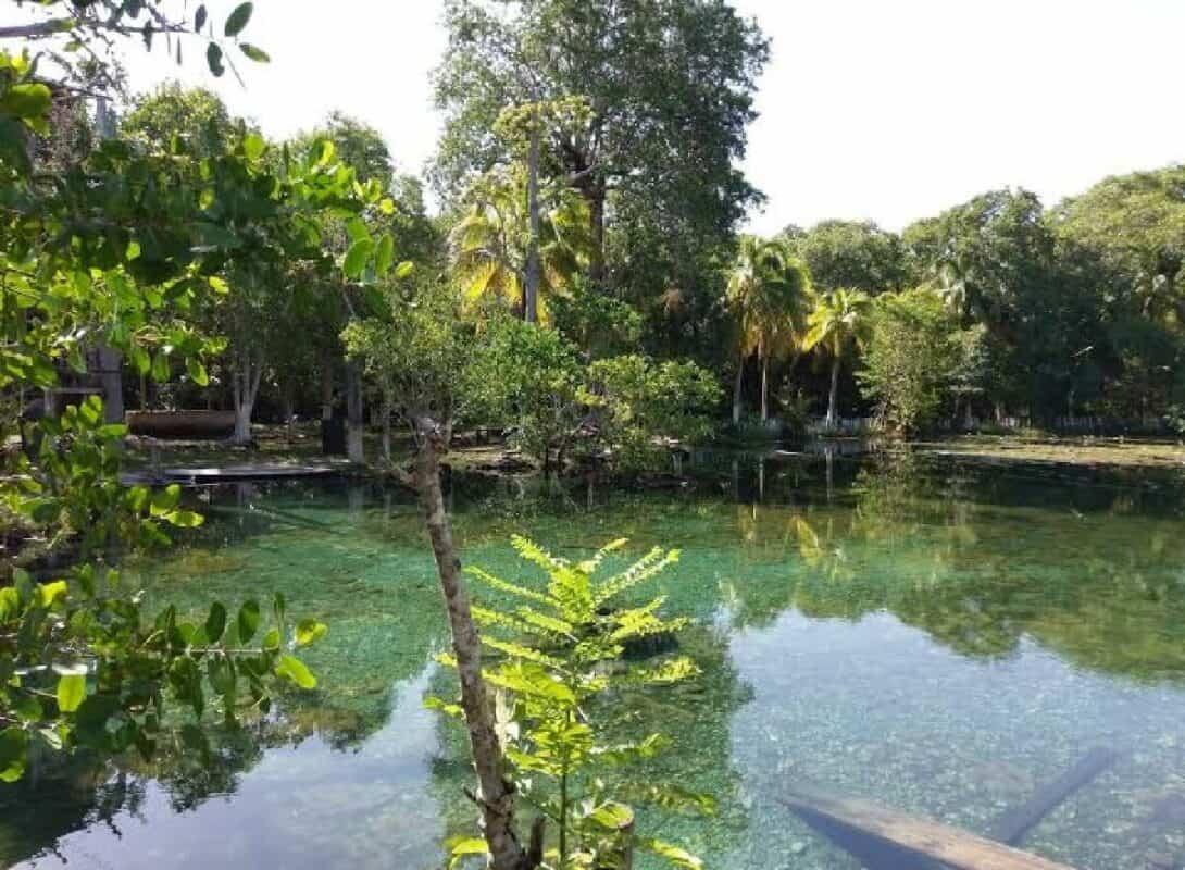 Qué hacer en Campeche - Petenes